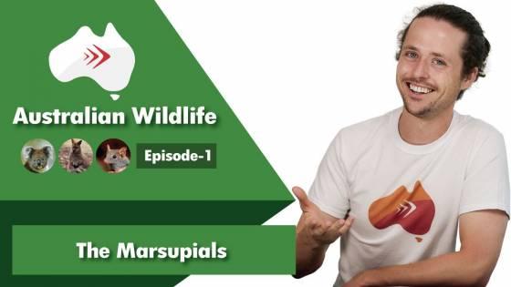Australian Wildlife Ep 1: